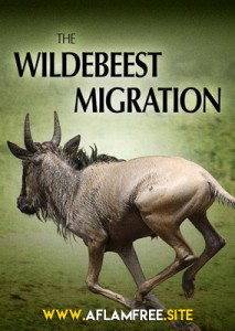 The Wildebeest Migration 2013